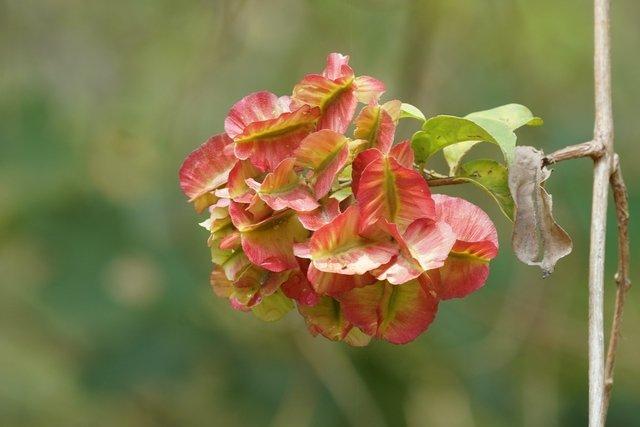 11 remédios caseiros para artrite reumatóide e como fazer