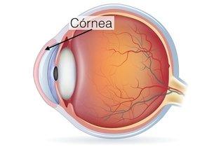 Localização da córnea no olho