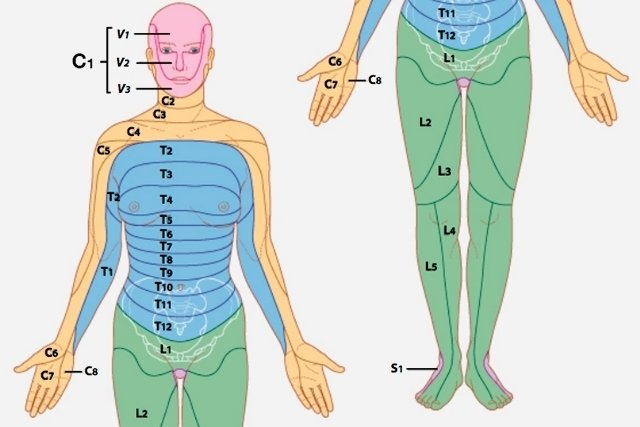 Principais dermátomos do corpo
