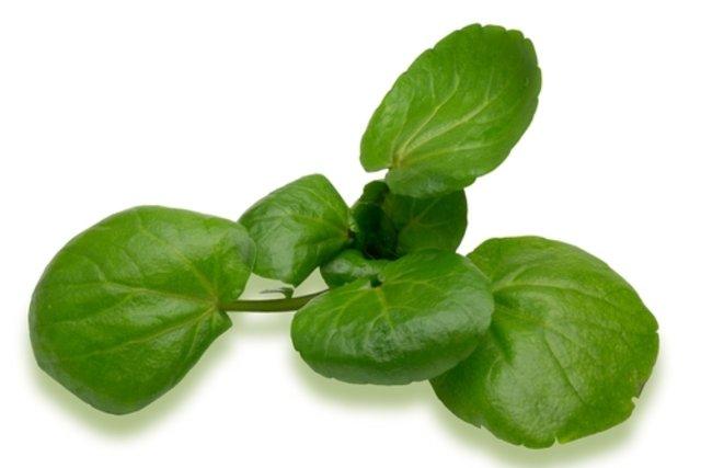 folha de agrião serve para gripe