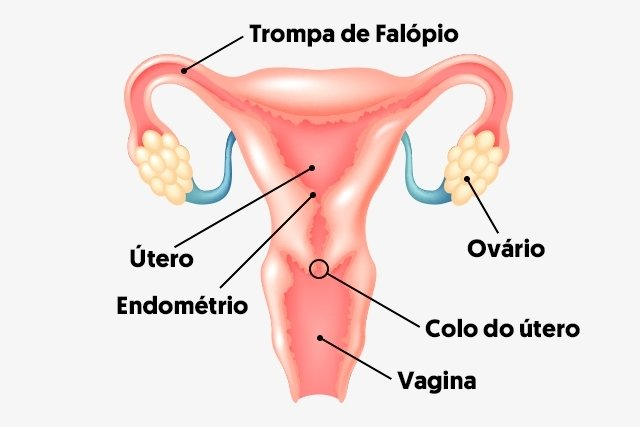 O que significa colo do útero fechado ou aberto