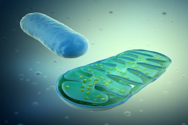 trastornos mitocondriales heteroplasmáticos y diabetes
