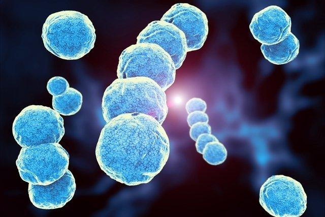 Streptococcus: o que é, como se pega e principais sintomas