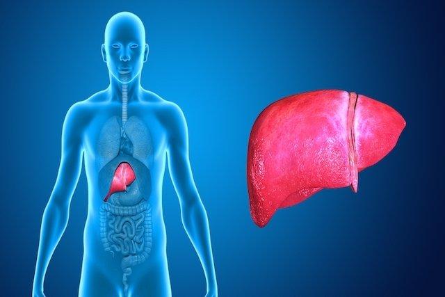 Para qué sirve el hígado y dónde se localiza - Tua Saúde