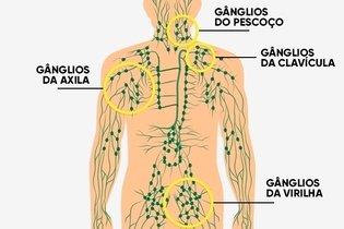 Principais grupos de gânglios linfáticos