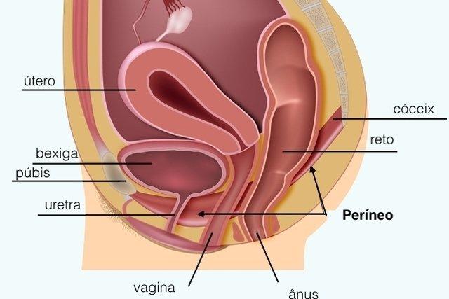 Exercícios do Assoalho Pélvico na gravidez: Como, quando e onde fazer