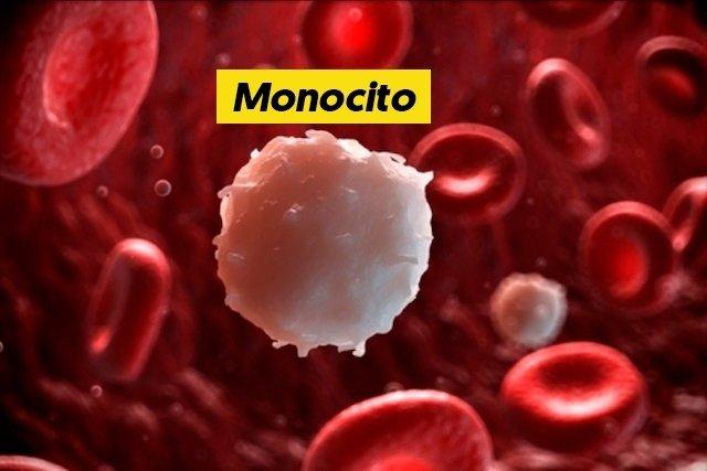 Monocitos - Qué son y cuáles son los valores normales