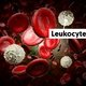 Leukocytes: what are they and what's their ideal count