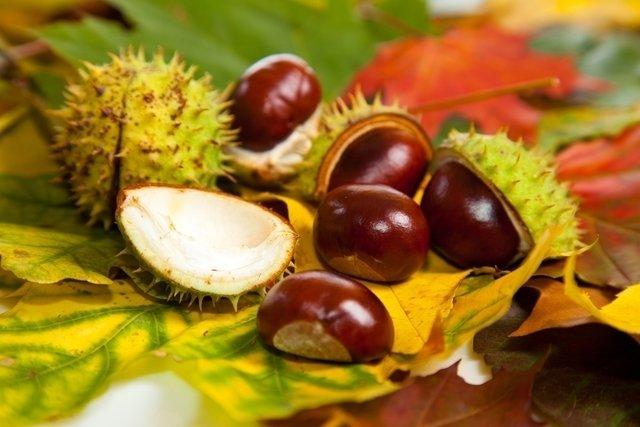 6 remédios caseiros para Acabar com a Celulite