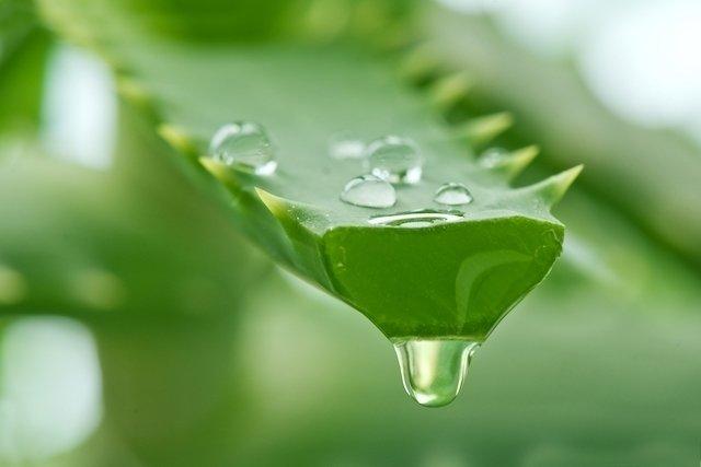 Az aloe folyékony extraktumok terápiás tulajdonságai. Aloe injekciók a nőgyógyászatban - Babiblog