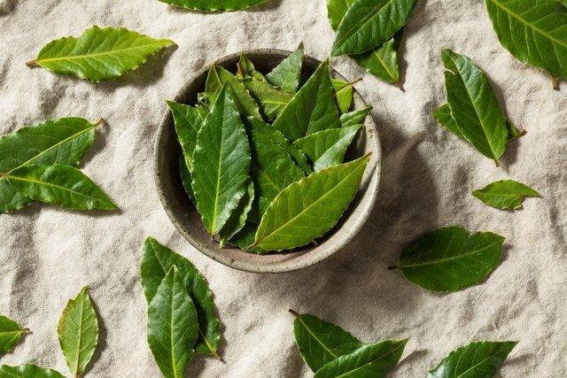 Folhas de louro (chá de louro): para que serve e como fazer o chá