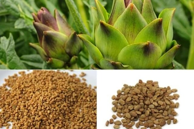 Ingredientes necessários para fazer o chá de feno-grego com alcachofra