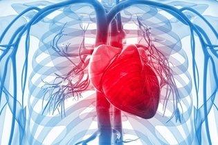 Localização do coração