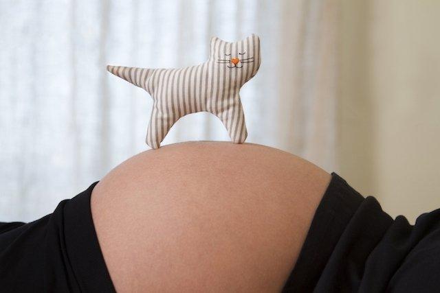 Toxoplasmose na gravidez: sintomas, riscos e tratamento