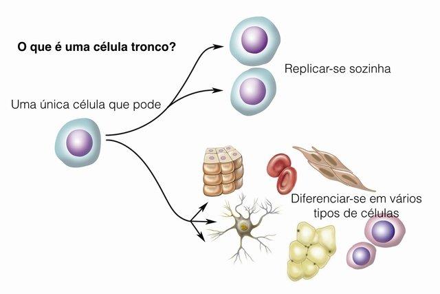 O que são células tronco
