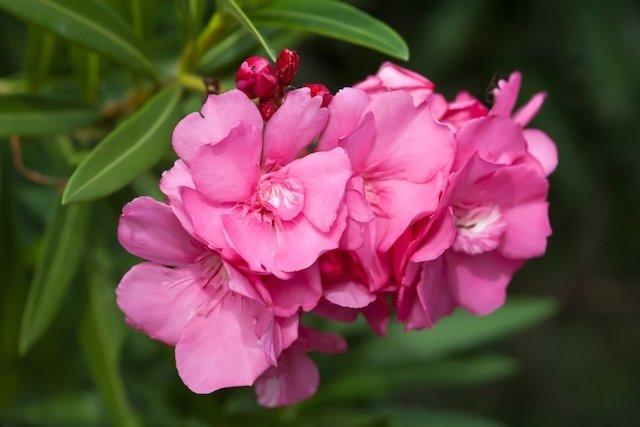 9 Plantas venenosas que pode ter em casa