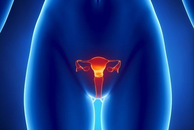 Quais são os hormônios femininos e para que servem