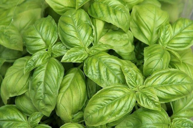 Cultive Plantas Aromáticas que Substituem o Sal