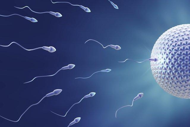 Data da concepção: como calcular o dia em que engravidei