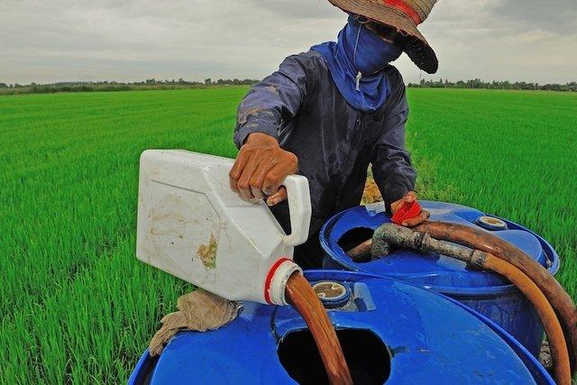 Pesticida usado em reservas de água pode ser causa de Microcefalia