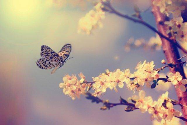 O que é Motefobia: O medo de borboletas