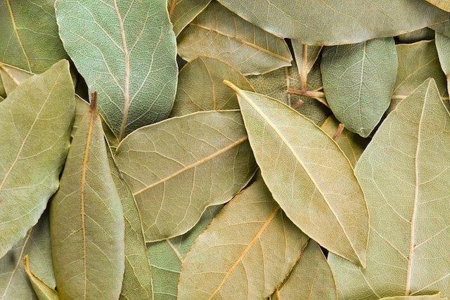 Como usar as folhas do louro para melhorar a digestão