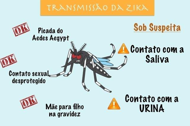Conheça as 3 doenças que o Zika Vírus pode provocar
