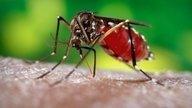 Conozca cuáles son los diferentes Tipos de dengue