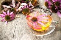 Chá de equinácea para gripe e resfriado