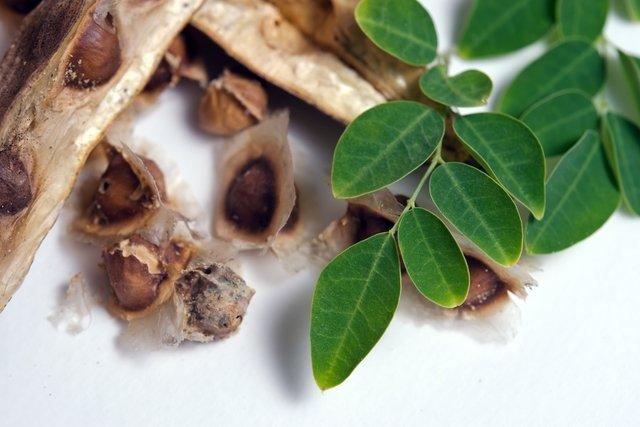 13 Benefícios da moringa para a saúde