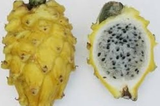 Pitahaya: 6 beneficios para la salud y cómo comer la fruta