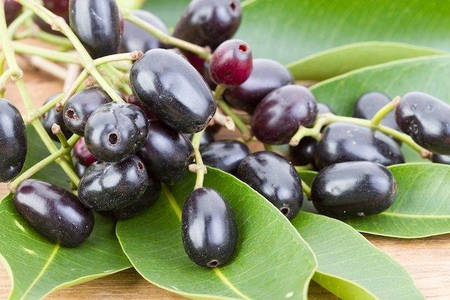 fruta noni pra que serve