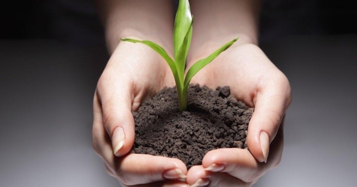hierbas nigerianas para la diabetes