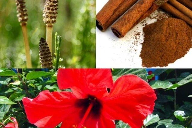 Ingredientes necessários para fazer o chá de hibisco com canela
