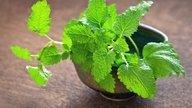 Lemon Balm: Health Benefits, How To Make Tea & Side Effects