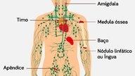 O que pode causar câncer linfático