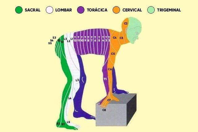 Mapa dos dermátomos na posição de 4 apoios
