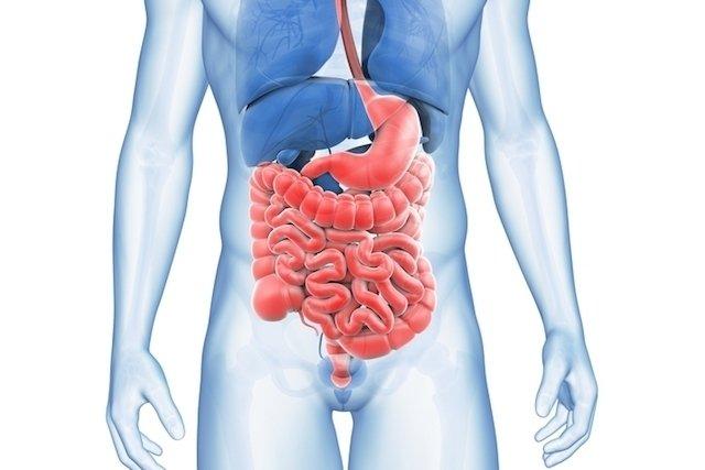 Sistema digestório: funções, órgãos e processo digestivo