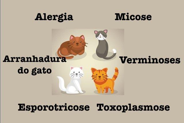 7 Doenças que podem ser transmitidas pelos Gatos aos Humanos