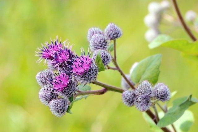 7 Remedios caseros y naturales para tratar el Herpes