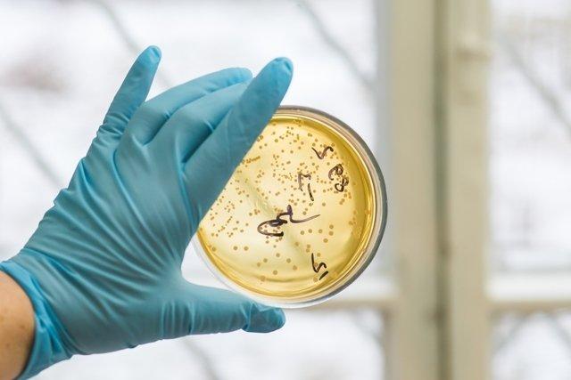 Staphylococcus aureus: sintomas, doenças, diagnóstico e como é feito o tratamento