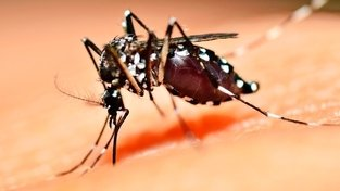 O lado do mosquito  imagem de destaque