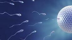 Fecha de la concepción: cómo calcular el día que quedé embarazada